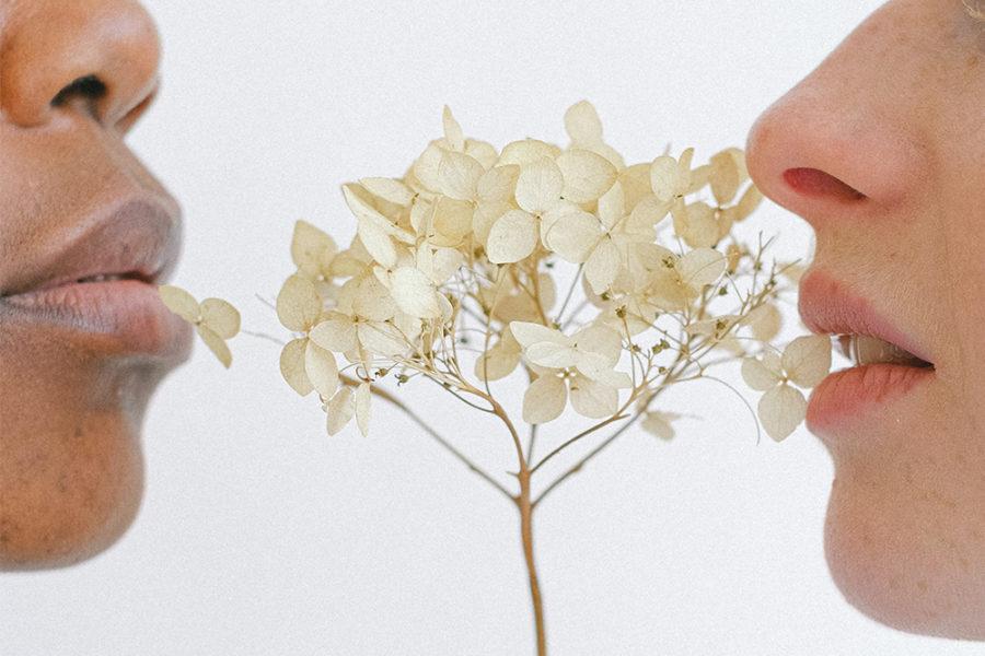 Flower Blooming in Spring